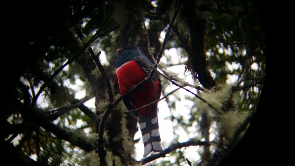 A trogon sitting on a branch. Photo: Amelia