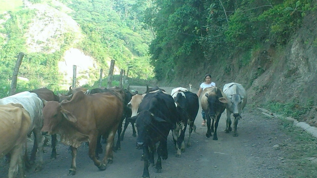 On the road to Puerto Boyacá.  Photo by V.