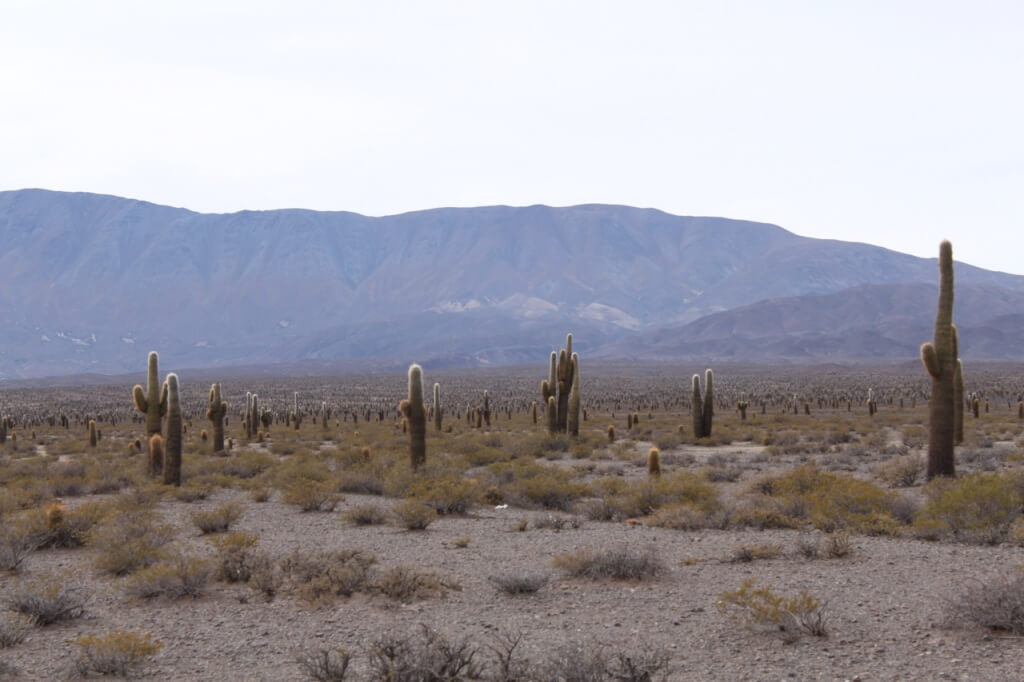 Los Cardones National Park. Photo: Nate