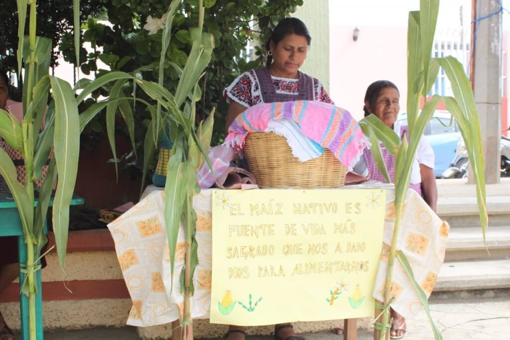 A vendor at the native corn celebration in Santiago Apostle. Photo - Victoria