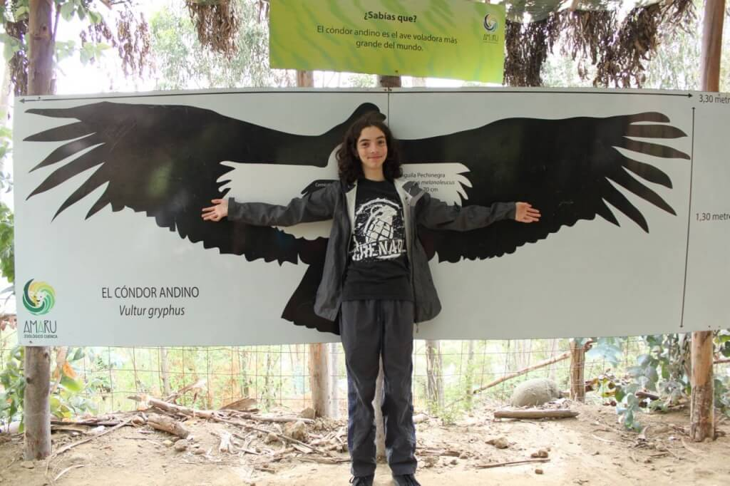 This is the size of the Andian Condor Photo: Nate