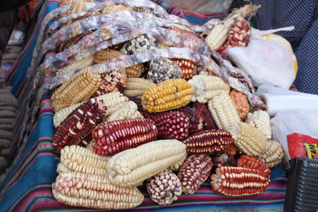 Purple corn, orange corn, white corn, all corn - Photo by Nate
